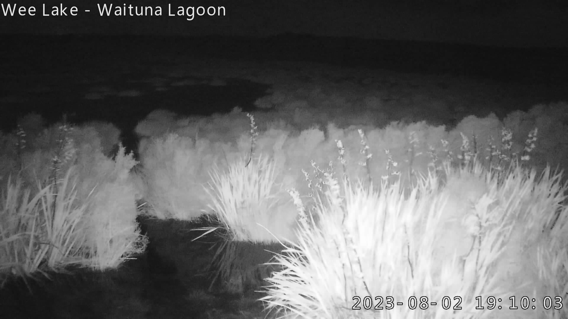 West end of Waituna Lagoon